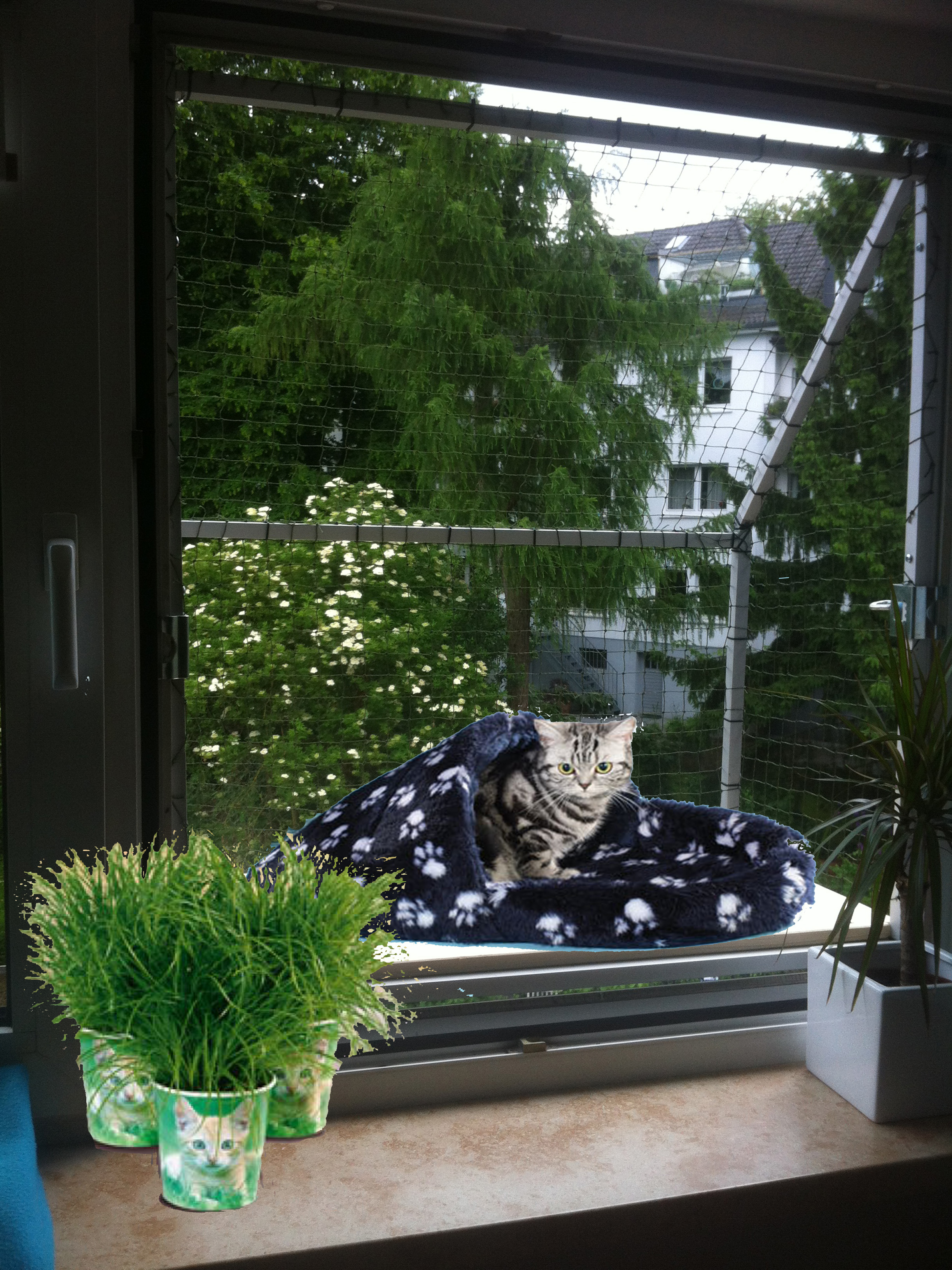 Balkonkatze