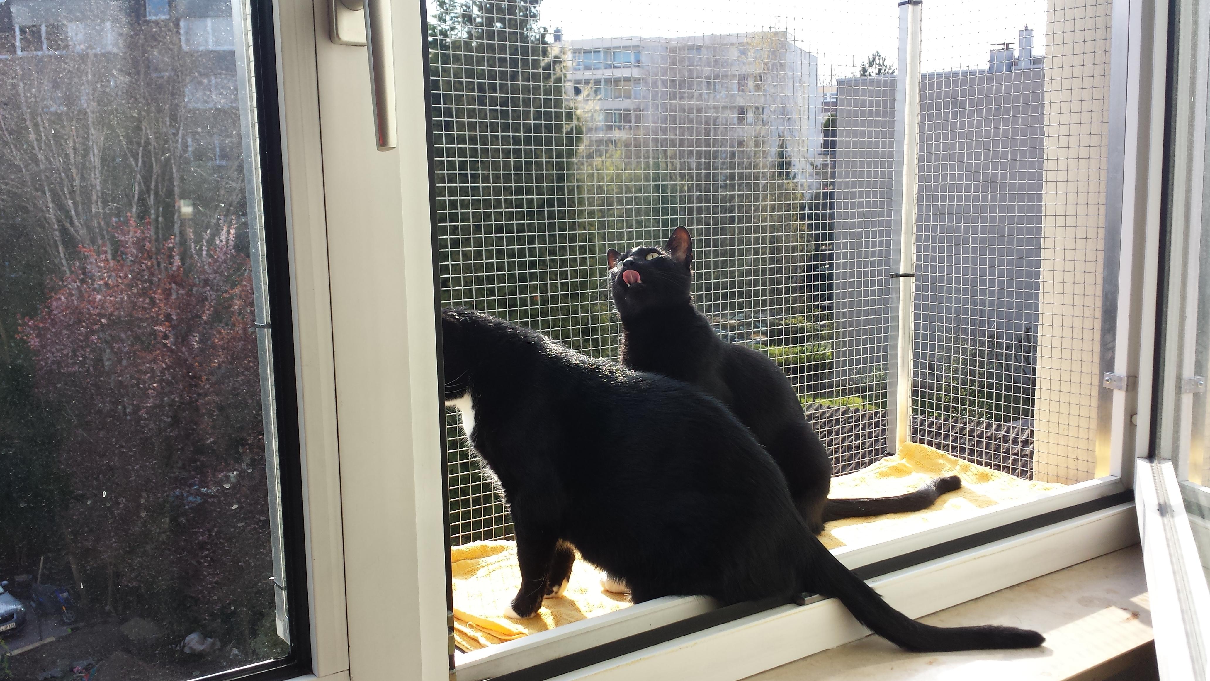 Katzen-nutzen-Katzenbalkon