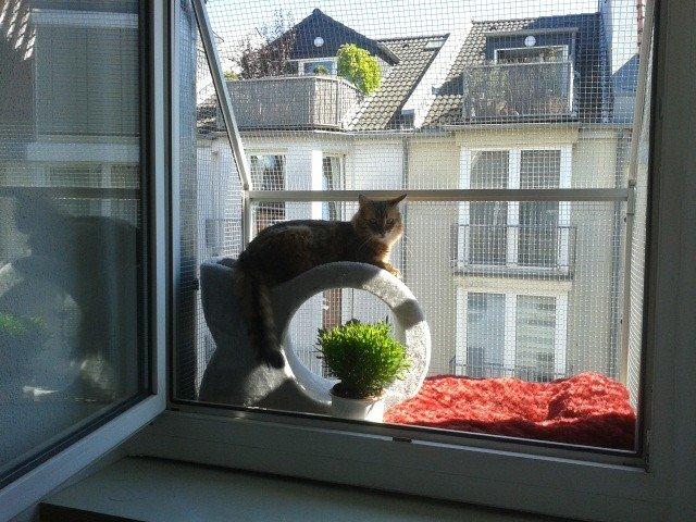 Katzenbalkon-Katzenloggia
