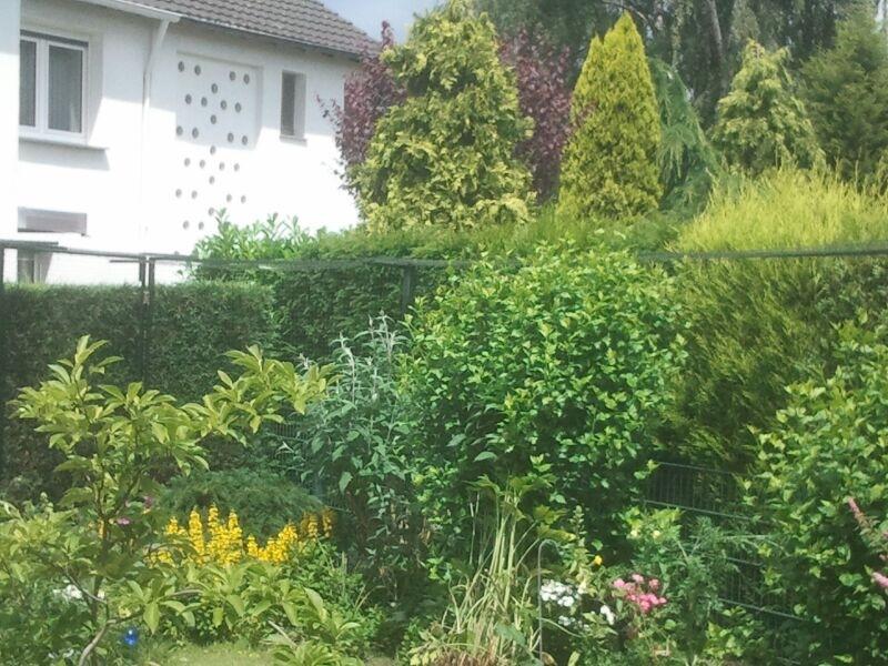 Gartenhaus katzensicher gestaltet