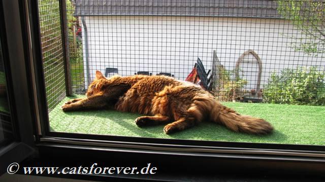 Katzensicheres Fenster – Kratzfester Insektenschutz ohne bohren