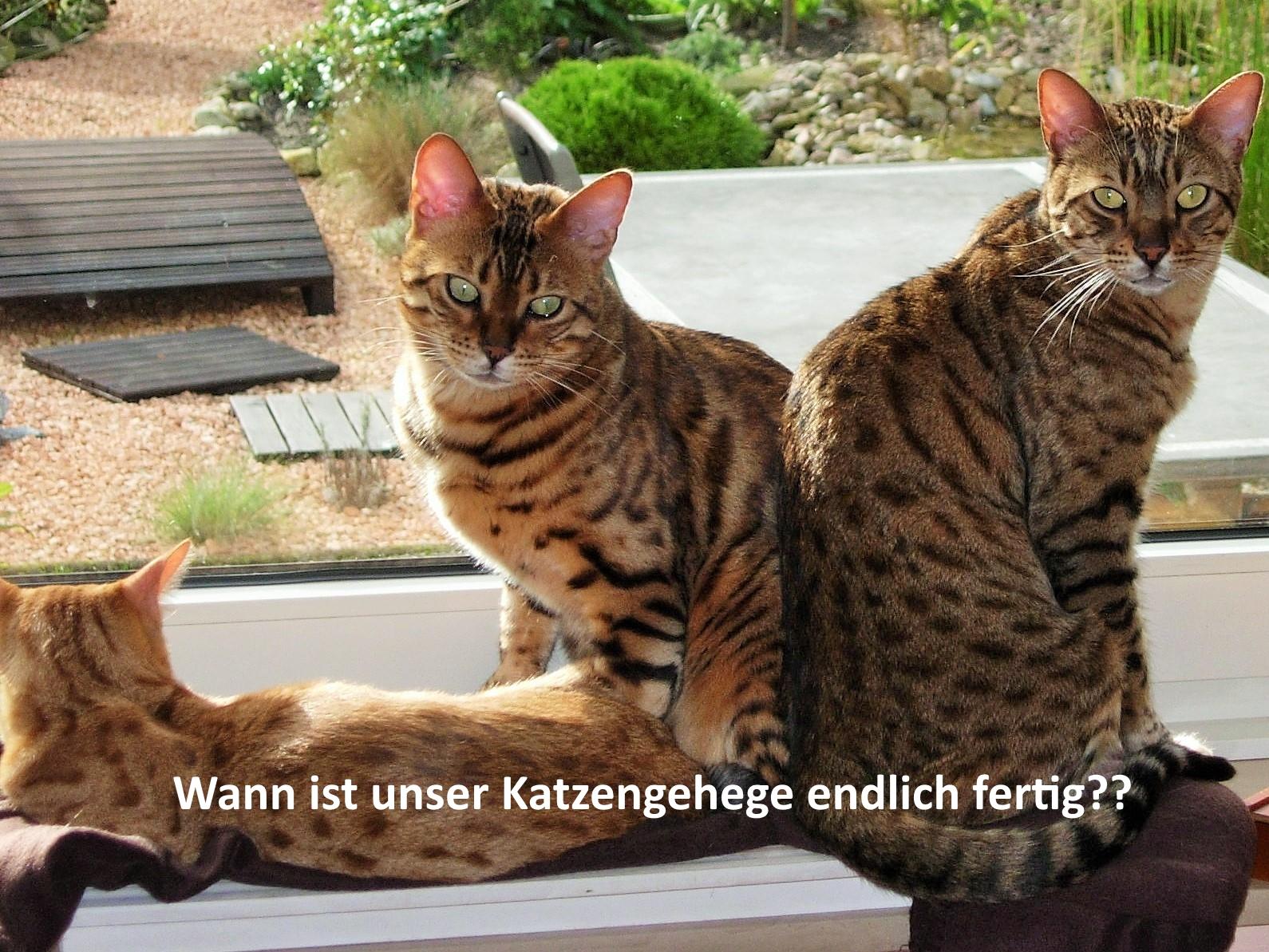 Katzengehge auf Terrasse für Bengal-Katzen