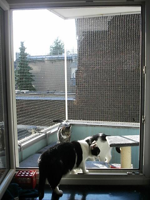 Balkontür und Fenster mit Katzennetz ohne bohren
