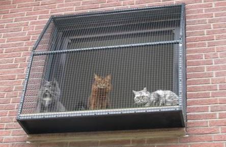 ein Katzenbalkon der Fensterplatz für Katzen
