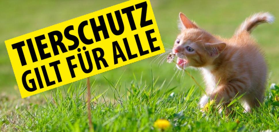 Fenstersicherung gesetzlich vorgeschrieben -Österreich-