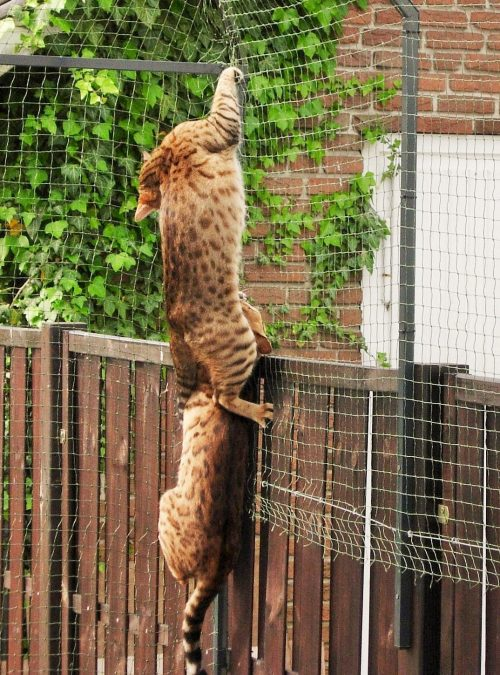 Garten mit Katzennetz & Katzengehege System