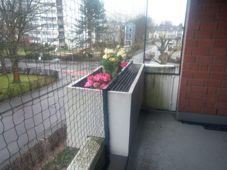 Urteil: Mieter dürfen Katzennetz an Balkon anbringen